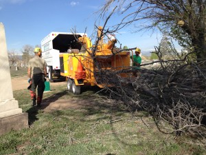 Mountain High Tree Service removes a dead tree.