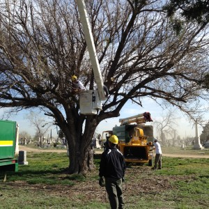 Davey Tree Expert sent 3 tree crews to remove dead trees.