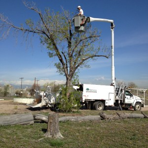 Swingle Tree, Lawn & Landscape Company sent a crew to assist with tree removal.